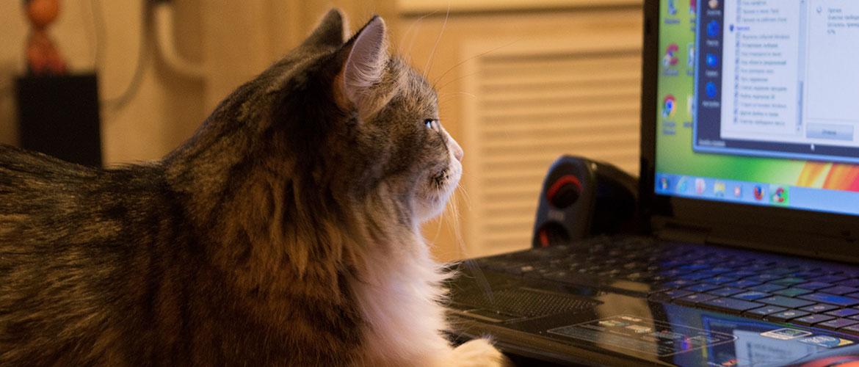 игровой-мощный-ноутбук